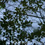Reflektion der Blätter